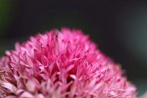 FLower 009 by Acolite