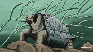 268 - Galapagos Tortoise by Shasel