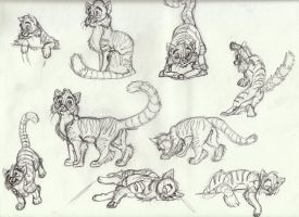 Cat Sketches by Animator-who-Draws