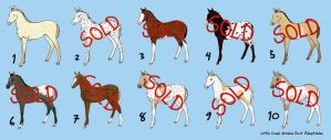 Foal Point Adoptables-ALL SOLD by LittleCreekStables