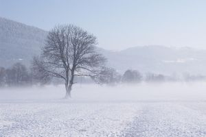 Snowy Field 452859 by StockProject1