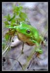 Frog...again by SuperSal001