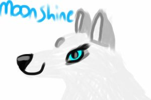 MoonShine sketch by jlo8