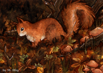 Squirrel! Suquii qui urell... by Diaris