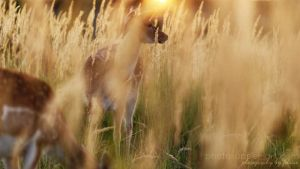 In golden light, we wait... by FeliDae84