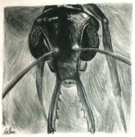 Art Project: Ant by Inamkur