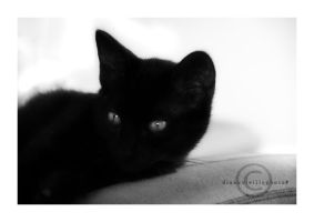 The Black Panthere by Lorline