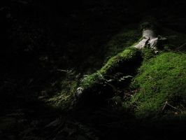 Lost in the Dark Forest by entropic-mysteries