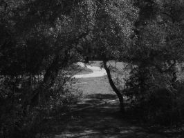 A path between the trees by Galliard47