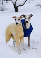 Whippets Elly and Teodor by laura75325