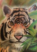 TigRe by sollamy
