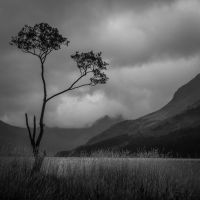 lone tree by lesterlester