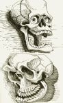 two skulls in ink by heckthor