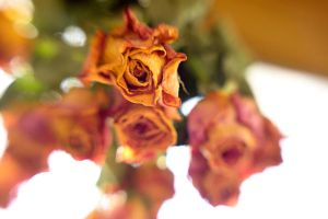 Dried Roses I by LDFranklin