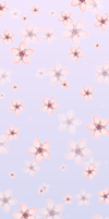 Cherry Blossoms Background (F2U!) by DaniGhost