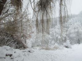 Lonely willow. Winter. by exogadget