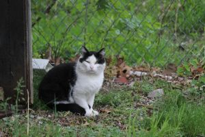 Sneering Neighbor Cat by Toderico