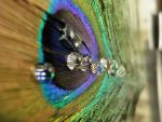 Droplets on a Feather by mcompton99987
