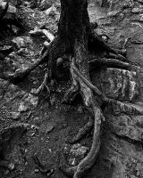 Flowing Roots by AquarianPhotography