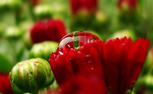 Red Bubble by TreeClimber