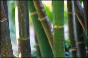 Bamboo by doyles-slave