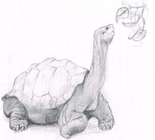 Sulcata by Animal-Amans