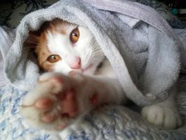 Hidden amongst the towels by luniara