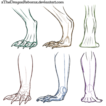 Dragon Feet Study by xTheDragonRebornx