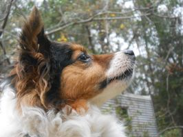 alert by Colliequest