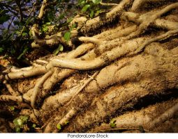 Roots 05 by AnitaJoy-Stock