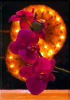 Orchid... by Yancis