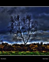 The Birch by mad1dave