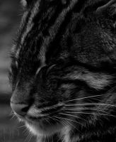 Noir Fishing Cat by DaytonaBlue64Impala