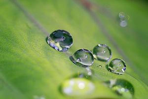 Droplet 71 by josgoh