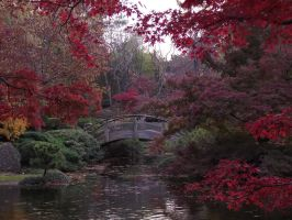 Fort Worth Japanese Garden by pyrexa