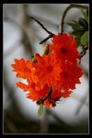 Red Tree Flower by Hashassin