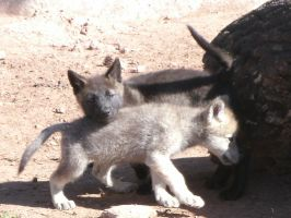 Wolf Pups by MadForHatters