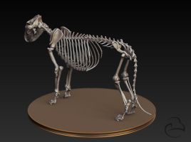 Misc - Lion skeleton 2 by Peet-B