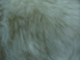 White Fur by Insan-Stock