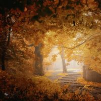 Turn to Fall by ildiko-neer