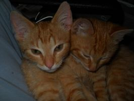 My cats Frank and Fred by Kami4427