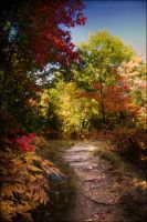 Painted Pathway by Sarah--Lynne