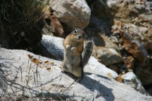Another Rodent by AmblingPhotographer