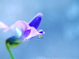 Blue Droplet by onixaStock