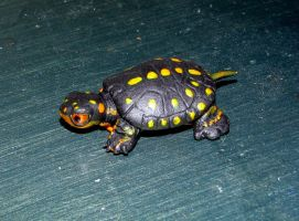 spotted turtle hatchling sculpt by LandGart