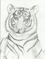 Tiger by eliza1star