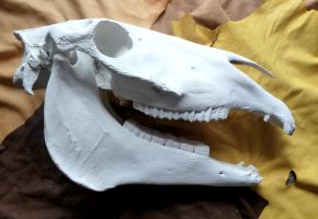 Big ol' horse skull (for sale) by lupagreenwolf