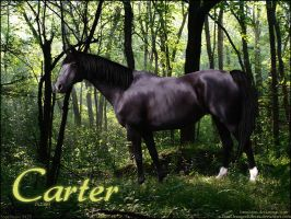 Carter by Soppinaro