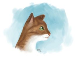 A speedpaint of my cat by taina-r