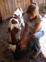 Danielle Feeding a Calf 02 by FantasyStock